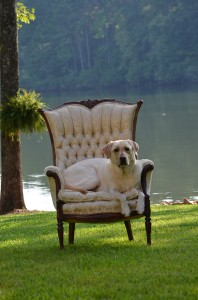 its a lab thing brody saban lake oconee (22)