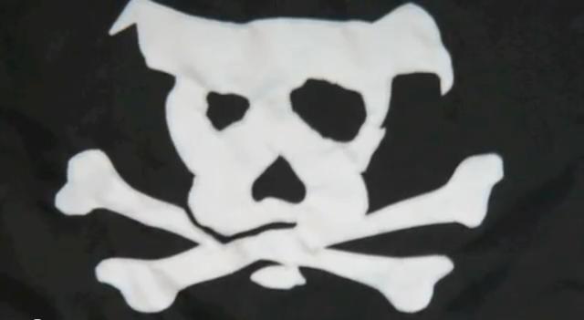 its a lab thing pirate cam labrador