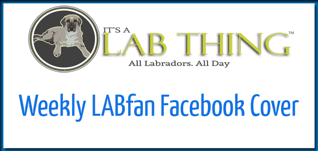 Its a Lab Thing Facebook Cover Featured