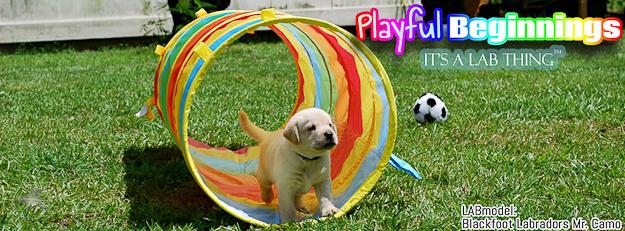 its a lab thing-puppy camo-labrador