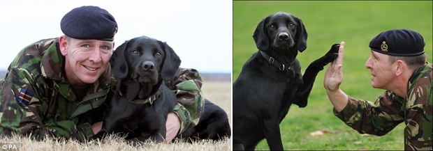 Its-a-Lab-Thing-Veterans-Day-Labradors004