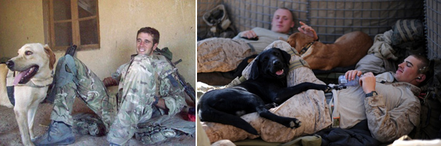 Its-a-Lab-Thing-Veterans-Day-Labradors010