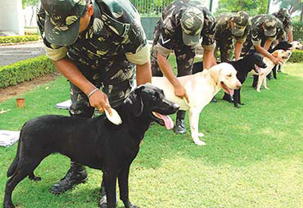 Its-a-Lab-Thing-Veterans-Day-Labradors015