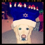 Jake-the-Jew-2012-hohoho-bestdog-itsalabthing-yellowdog-hanukkah