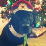 Lava-isnt-sure-there-are-enough-treats-for-this.-Haha-guidingeyes-merrychristmas