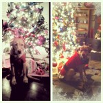 Merry-Christmas-from-Waylon-picstitch-ootd-santapaws-babywaylon-labsofinstagram-lab-yellowlab-itsala