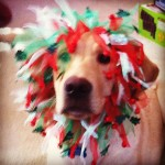 guidingeyes-Justin-the-Christmas-Lion-merrychristmas