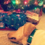 guidingeyes-Justin-with-visions-of-sugarplums-dancing-in-his-head...-merrychristmas