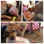 presents-christmas-yellowlab-openingpresents-itsalabthing-mybaby
