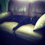One-with-the-couch-blacklab-labrador-lab-labradorretriever-lablove-lablovers-laboftheday-labstagram-