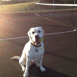 Tennis-time-tennis-ballboy-lab-itsalabthing-whitelab