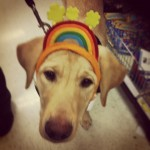 Whats-at-the-end-of-this-rainbow-guidingeyes-Justin