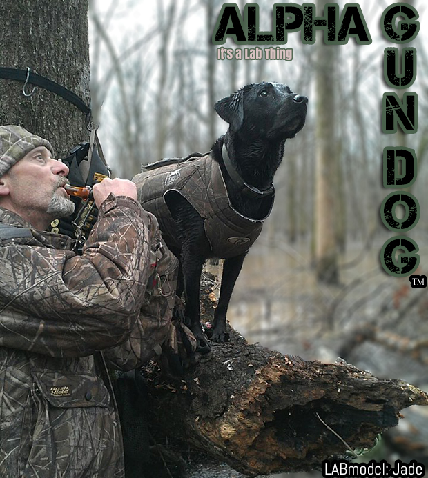 its a lab thing gundog labrador