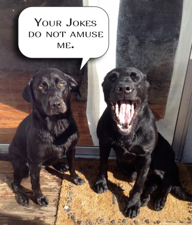 laughing at your own jokes it s a lab thing