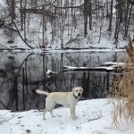 lab-whitelab-itsalabthing-snow-puremichigan-winter