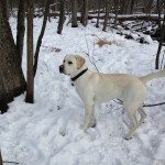 puremichigan-snow-lab-itsalabthing-whitelab
