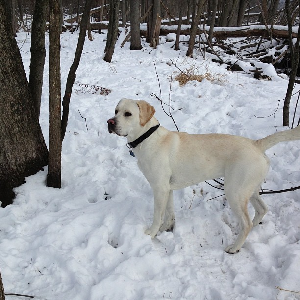 puremichigan-snow-lab-itsalabthing-whitelab