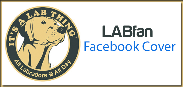 LABfan Facebook Cover: Ball Fever