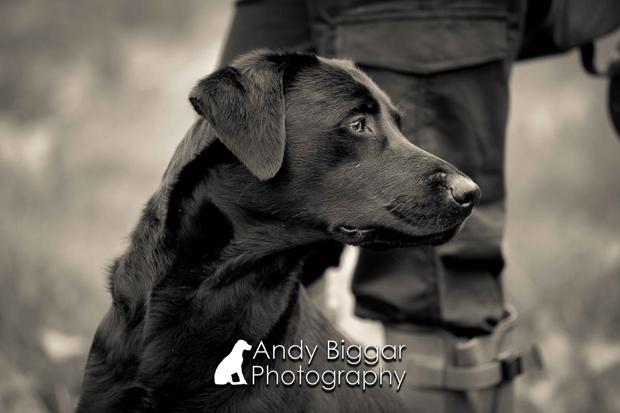 Its-a-Lab-Thing-Labrador-Andy-biggar-showcase-pt2-001