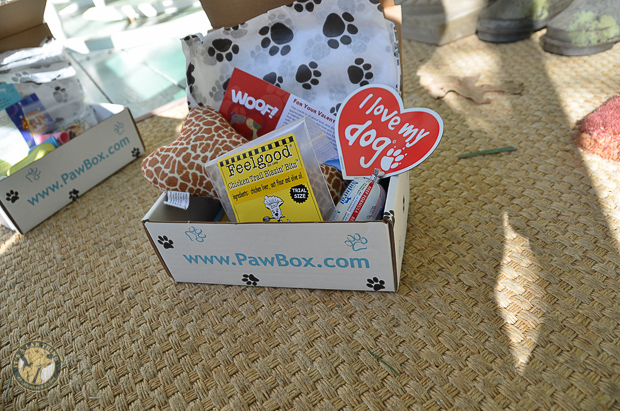 It's a Lab Thing PawBox-2