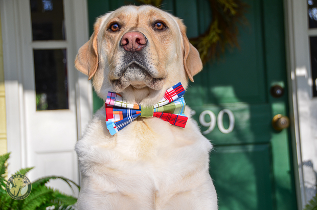 3 Shades of Dog It's a Lab Thing Bow Tie Labrador-2