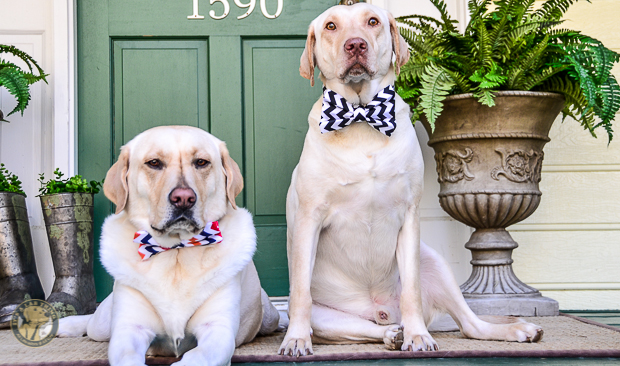 3 Shades of Dog It's a Lab Thing Bow Tie Labrador-7-2