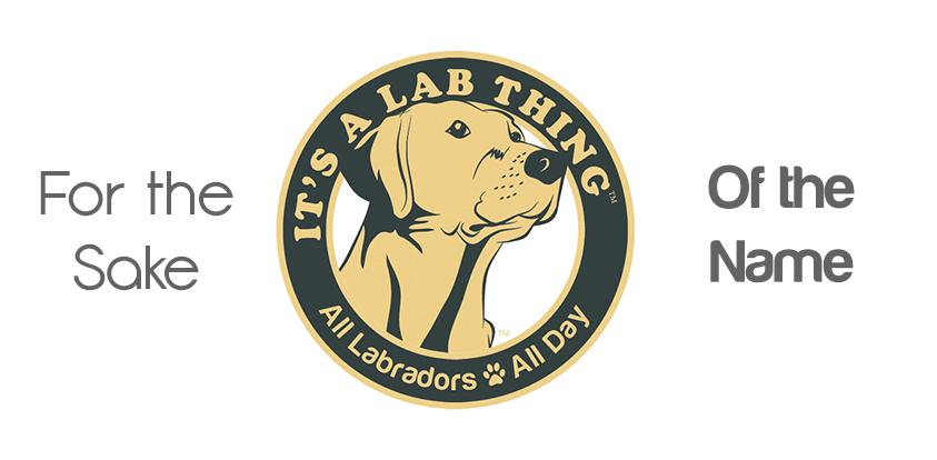 Name that LABfan's Labrador Puppy