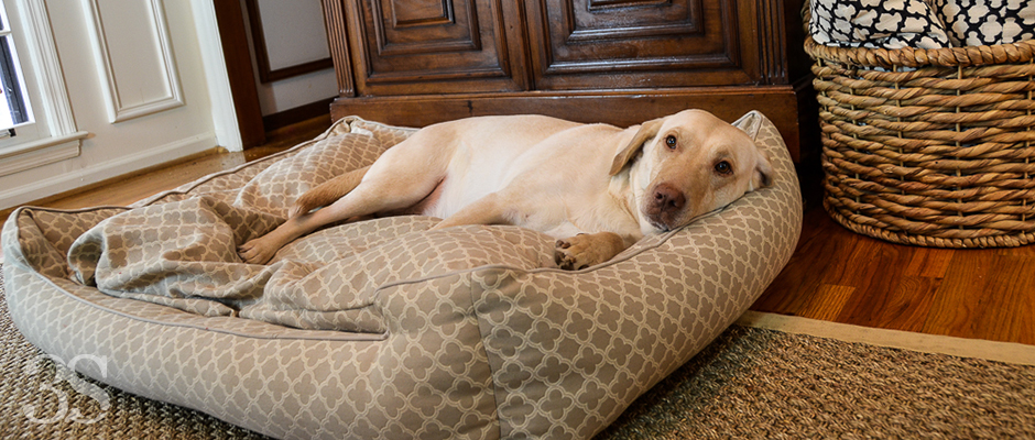 It's a Lab Thing 3 Shades of Dog Bed Green Trellis