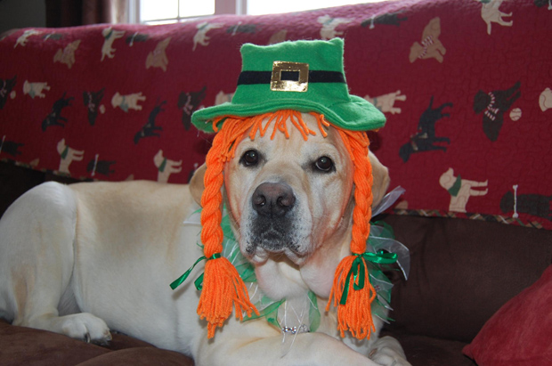 Its-a-Lab-Thing-Labrador-Irish-St-Patricks-day-003