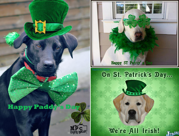 Its-a-Lab-Thing-Labrador-Irish-St-Patricks-day-005