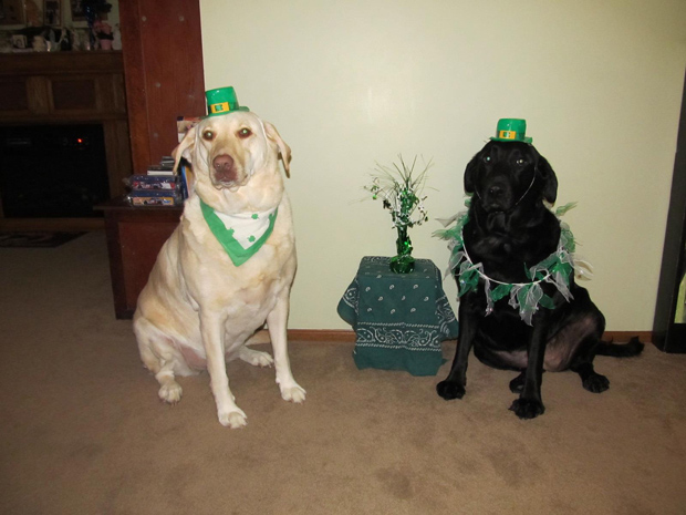 Its-a-Lab-Thing-Labrador-Irish-St-Patricks-day-006