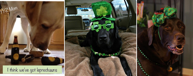 Its-a-Lab-Thing-Labrador-Irish-St-Patricks-day-009