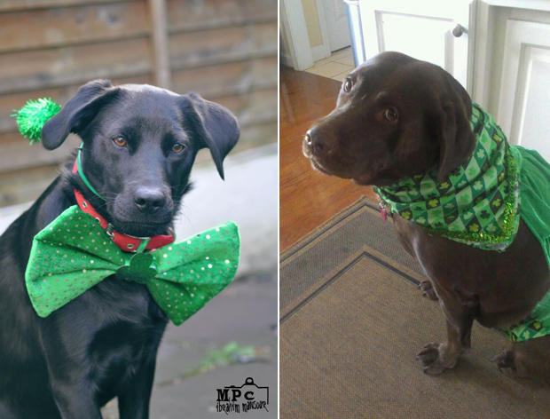 Its-a-Lab-Thing-Labrador-Irish-St-Patricks-day-011