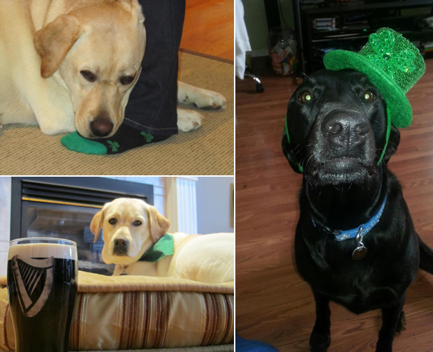Its-a-Lab-Thing-Labrador-Irish-St-Patricks-day-012