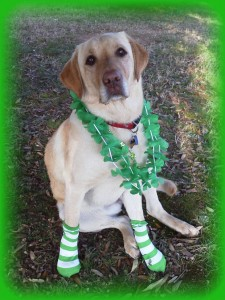 Its-a-Lab-Thing-Labrador-Irish-St-Patricks-day-017