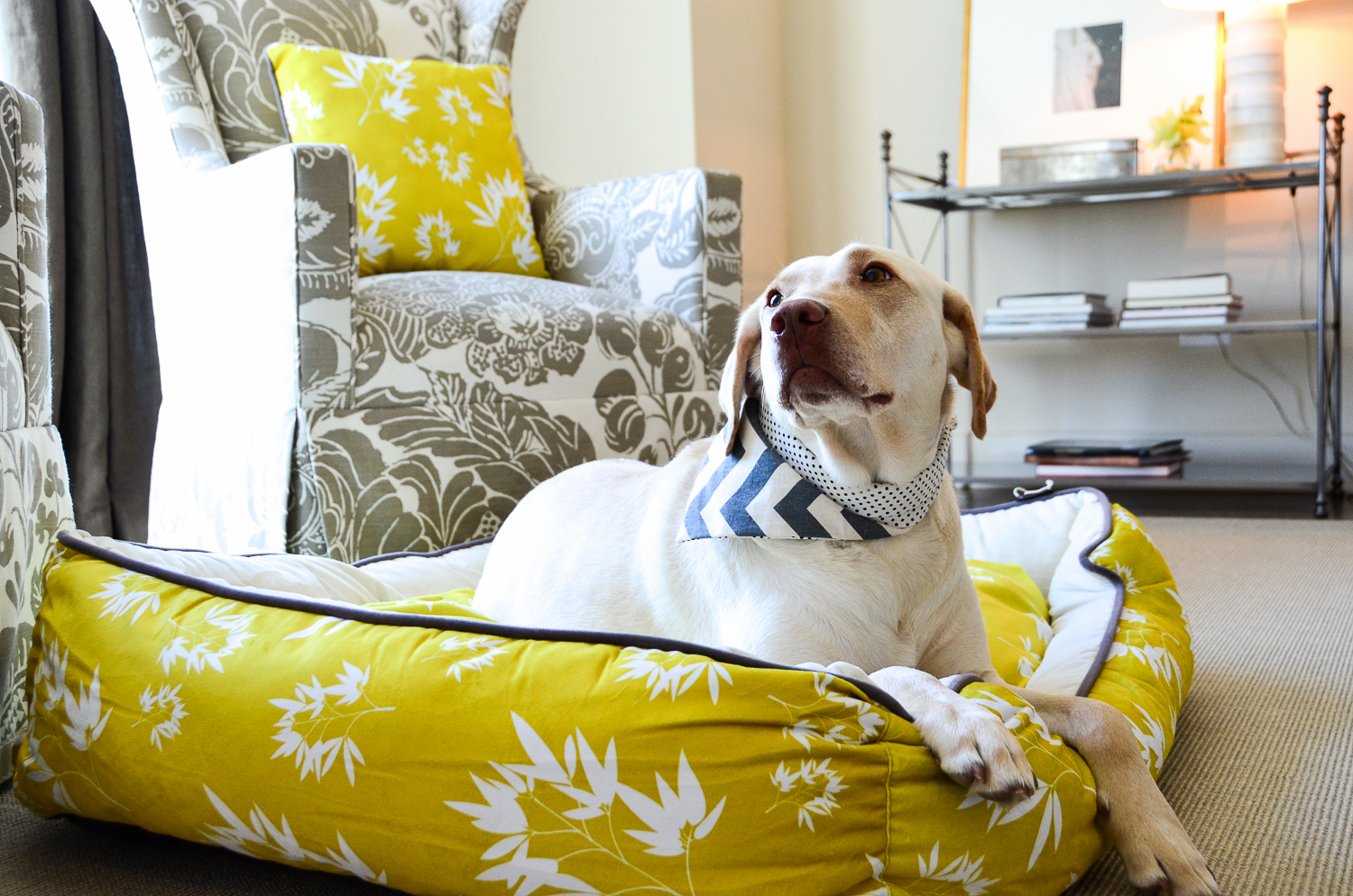 what you need to know about washable dog bed