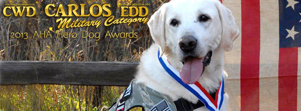 A Lab Named Carlos: Soldier, Decorated War Veteran, Cancer Survivor & Rescue
