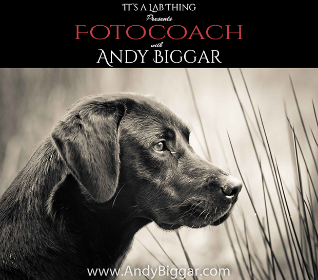It's-a-Lab-Thing-Andy-Biggar-Photgraphy-FotoCoach-web