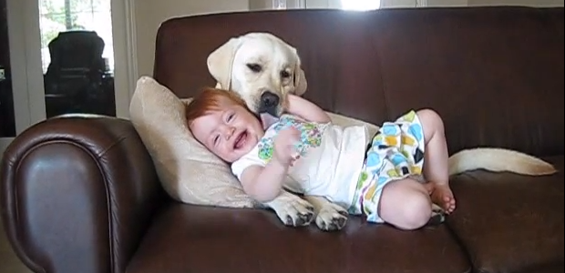It's_a_Lab_Thing_Cool_Yellow_Labrador_Licking_Baby