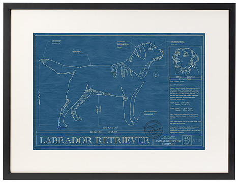 It's_a_Lab_Thing_Labrador_Blueprint