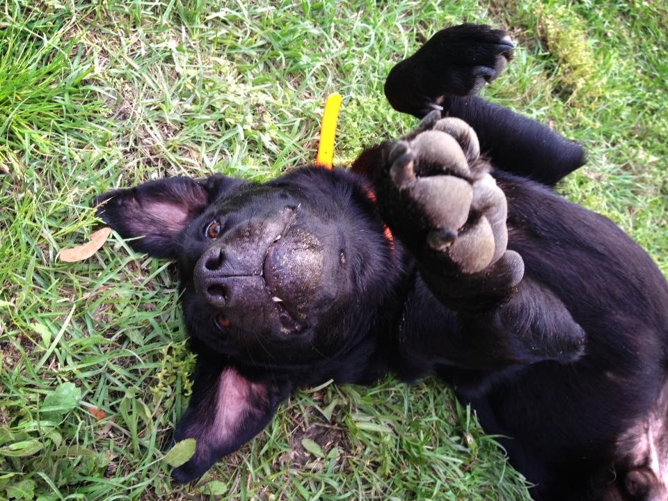 [Dear Labby] My Labrador has Dry Flaky Skin