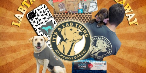 Cloud-Star-Dynamo-Dog-Treats-It's-a-Lab-Thing-Labardors-giveaway