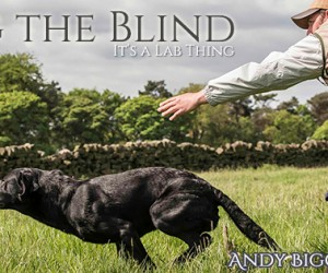 LABfan Facebook Cover: Lining the Blind with Andy Biggar