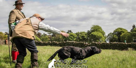 Its-a-Lab-Thing-Labrador-Andy-Biggar-Gun-Dog-Spirit-013
