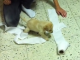 It's_a_Lab_Thing_Yellow_Labrador_Puppy_toilet_paper