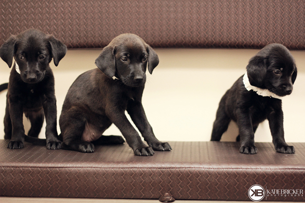 Seven Wonders of the World: Rescuing Labrador Puppies with Katie Bricker