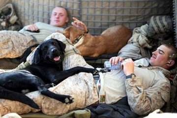 It's a Lab Thing Military Labradors with Men