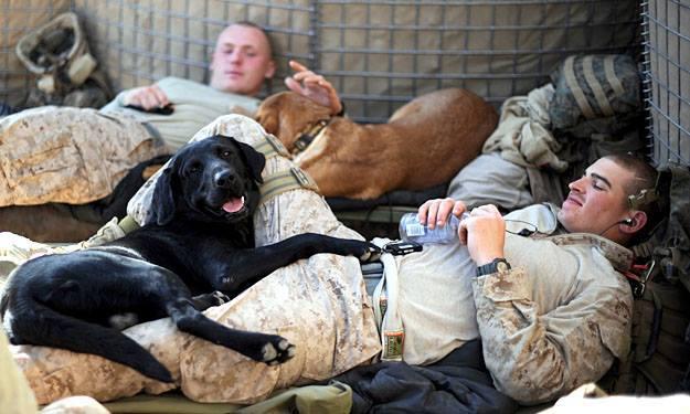 Labradors: Man's Best Friend