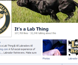 [FAQ] Where Do My Labrador Pictures Go on It's a Lab Thing Facebook?