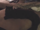 It's_a_Lab_Thing_Labradors_soldier_and_cat_funny_video
